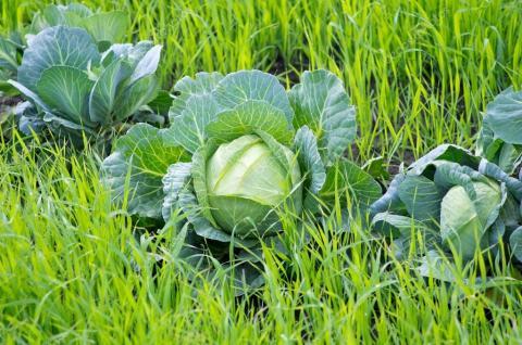 Сдержанный оптимизм: изменит ли новый закон фермерские будни?