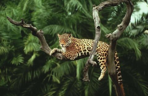 Мимо Беларуси: ЮНЕП опубликовала рейтинг богатейших по биоразнообразию стран