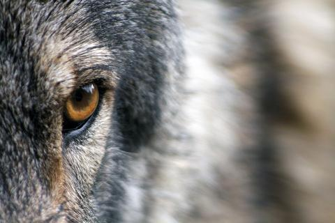 Шесть видов животных, которыми мы жертвуем ради экономического развития