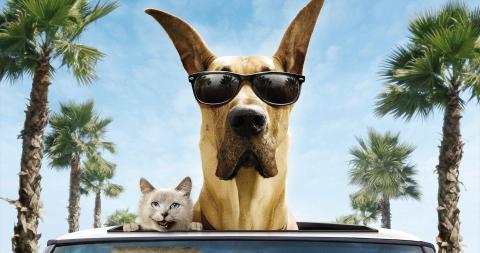 Путешествия и переезды с животными: как готовиться, чего ожидать