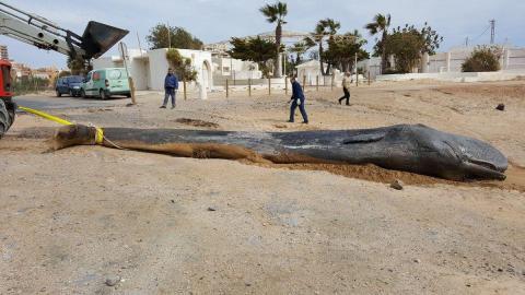 Ещё один кит, погибший из-за съеденного пластика, – очередная демонстрация того, как бездумно мы убиваем