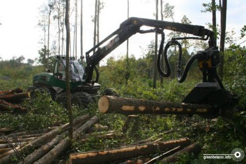 Перспективы лесного хозяйства Беларуси: рубить как можно больше, даже если некуда продать