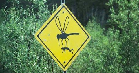 7 причин, почему вас особенно любят комары. И бонус: 12 растений, которые их отпугнут