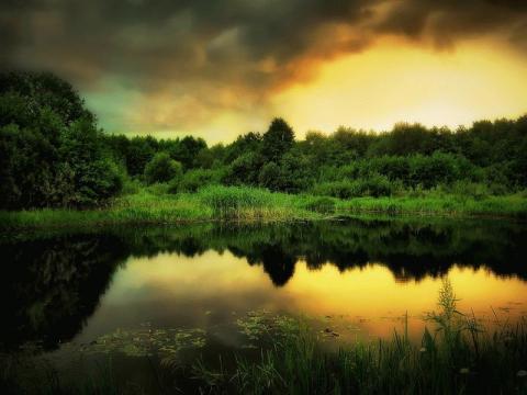 Менеджмент в дикой природе: как и зачем управлять заказниками и нацпарками Беларуси?