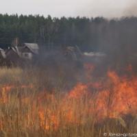 Учёные назвали пожары главной причиной гибели лесов на планете