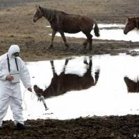«Гринпис» опубликовал доклад об «атомных шрамах» Чернобыля и Фукусимы