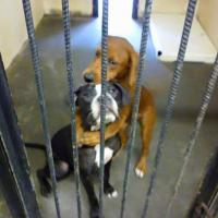 Объятия спасли от усыпления двух собак в самый последний момент