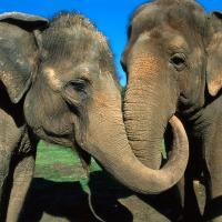 20 июня отмечается Всемирный день защиты слонов в зоопарках