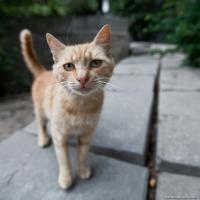 Жизнь киевских котов меняется – их признали частью экосистемы города
