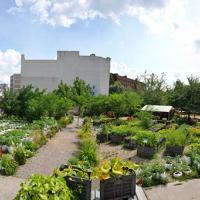 Весной в центре Минска появится настоящий огород