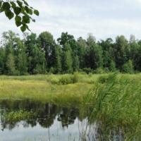 Для получения сертификата FSC Национальному парку «Припятский» нужно устранить более 40 замечаний
