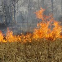 В Могилёвской области за три недели за выжигание сухой растительности к административной ответственности привлечен 31 человек