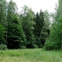 Беларусь получит $40 млн на развитие лесов от Всемирного банка