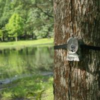 Толочинский район стал первопроходцем в оборудовании лесов видеокамерами