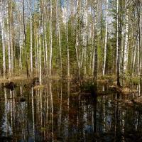 «Каждый год можно останавливать один завод»: из-за газификации в Беларуси сокращается потребление торфа