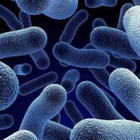 Ученые создали элементы питания из микробов