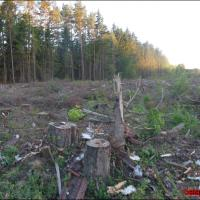 ЛЭП Белорусской АЭС строят не по тому проекту, который обсудили с общественностью