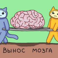 Записки о неудачном (?) опыте: как найти дом кошке и не сойти с ума
