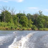 На Припяти хотят построить 6 плотин — экологи против
