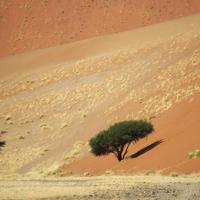 Изменение климата ускоряет миграцию людей из Африки