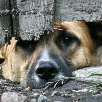 Уголовноя ответственность за жестокое обращение с животными!