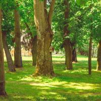 Любим такой зелёный Минск: фотопрогулка по укромным уголкам Ленинского района