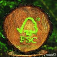 Почему лесная сертификация FSC в Беларуси проходит мимо внимания общественности?