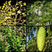 ТОП-10 растений Беларуси, которые могут исчезнуть из-за изменения климата