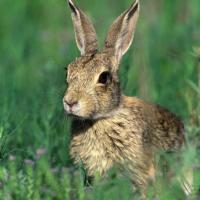 Минприроды ищет волонтёров для передержки диких животных!