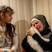 Потерявшийся кот нашёл хозяев-беженцев в Европе (видео)