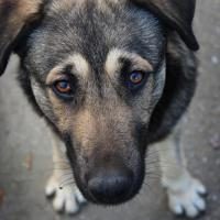 Пункты содержания бездомных животных появятся в Минске