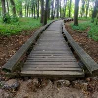 «Тяжкий позор в центральной части Минска». Природа захватывает и разрушает экозону Острова птиц