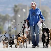 Какую ответственность несут владельцы собак, не убирающие за своими питомцами?