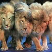 Животные больше не будут страдать в цирках Голландии