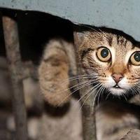 В России Минстрой  запретит замуровывать подвалы ради кошек