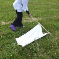 Зелёный портал выбросил белый флаг. Как мы искали (и нашли!) клещей в минских парках и зонах отдыха