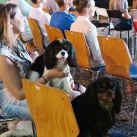 В пятницу второй dog friendly кинопоказ!