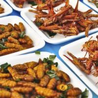 Кузнечики, личинки, черви — плюсы употребления в пищу насекомых