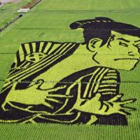 Рисовые поля в Японии превратились в живые полотна