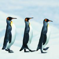 В конце 2015 года в Антарктиде появится первая беларусская станция