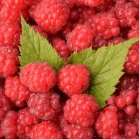 Ягоды могут стать главным органическим продуктом Беларуси