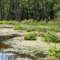 Осушенные болота выделяют рекордное количество парниковых газов