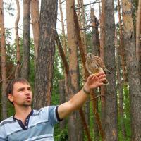 В Мачулищах выпустили на свободу трёх спасённых редких соколят