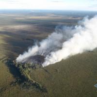 Спасатели пытаются ликвидировать пожар в нацпарке «Припятский»
