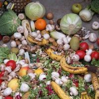 Развитые страны выбрасывают 40% продуктов питания