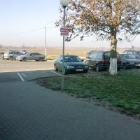 Ради автостоянки в Слуцке хотят спилить несколько деревьев