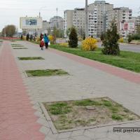 Брестский горисполком принял решение спилить в городе более 60 деревьев