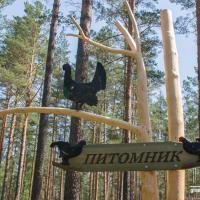 Родоначальники популяции: в Налибокской пуще начали воскрешать западноевропейских глухарей