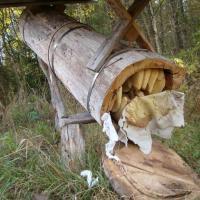 Пчёлы в колоде: пчеловоды ратуют за старинные способы получения мёда