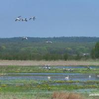 В Минске всем миром спасали биоразнообразие планеты